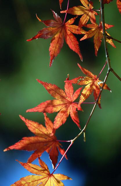 Takao-san's Autumn Colors