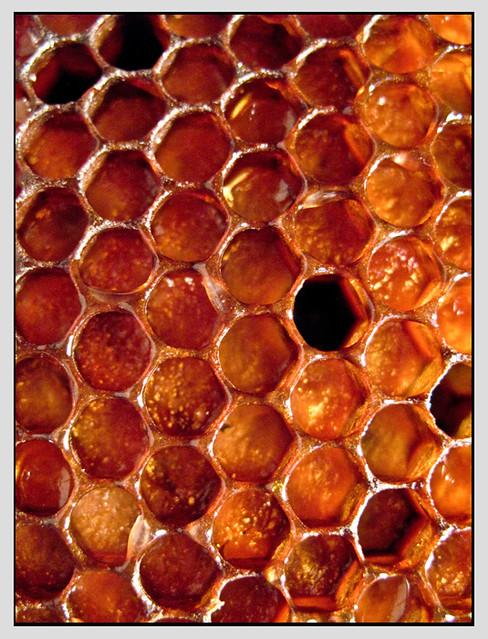 honigwaben - honeycombs