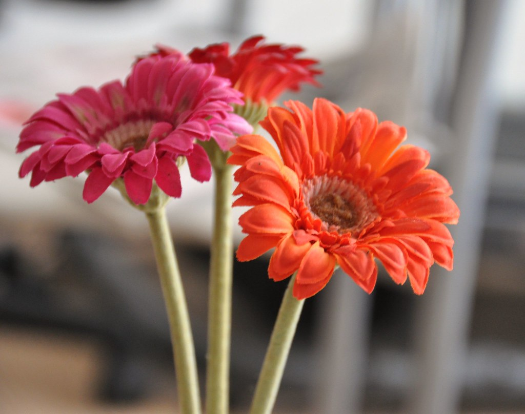 Flowers of Wisdom...