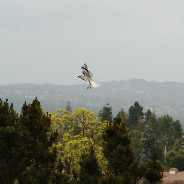 71/365 kite-takeoff