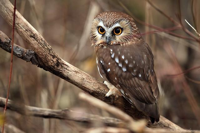 Wide-Eyed Beauty