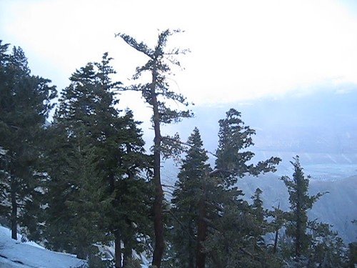 snow storm video wind mountainstation palmspringsaerialtramway treesswaying spriung 50mphwinds