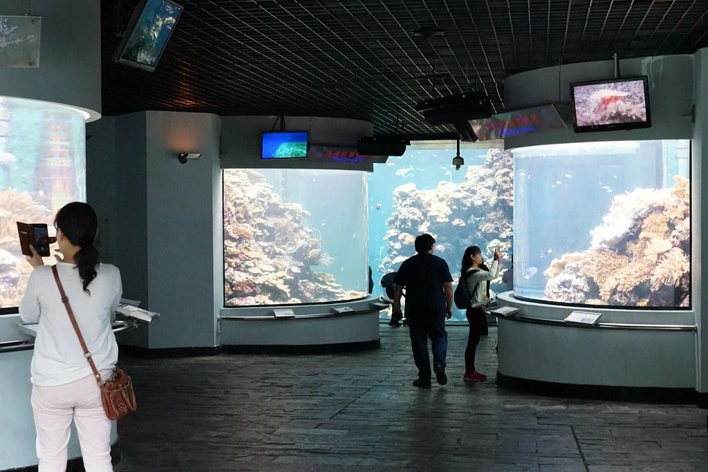 国立海洋生物博物館_44