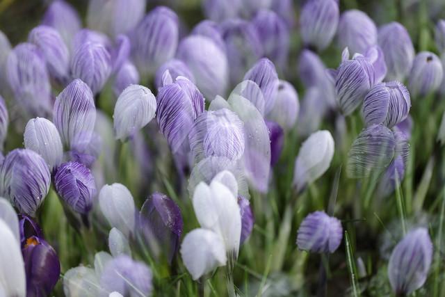 dreams in purple ~ in Explore