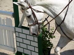 Horse (6)