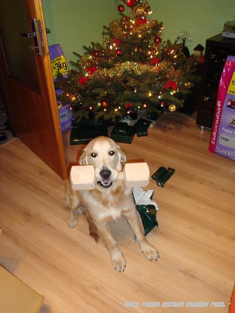 2008_12_24 - první Vánoce