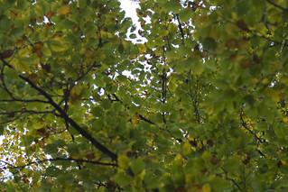 autumn   by fabianmohr