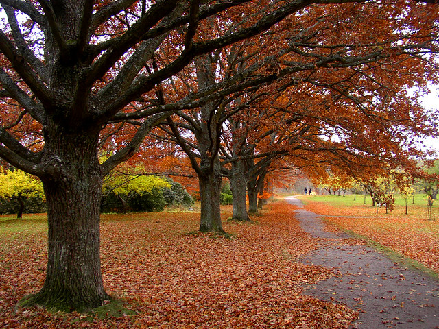 Falltime in the park
