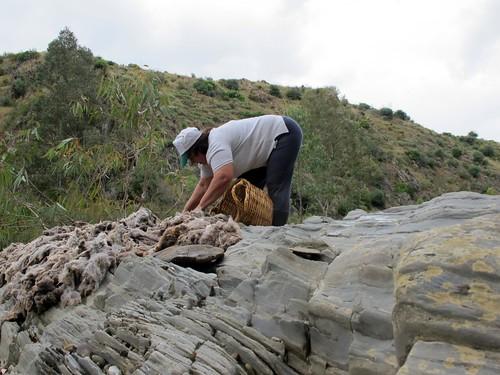 lavar a lã no alentejo 10 | by Rosa Pomar