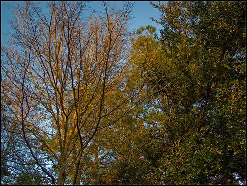 tree landscape evening