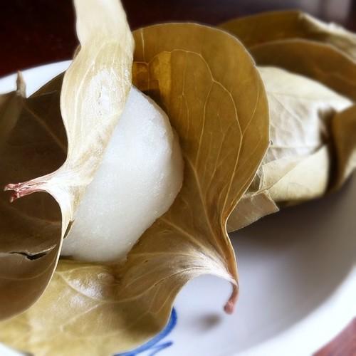 かしわ餅 kashiwa mochi