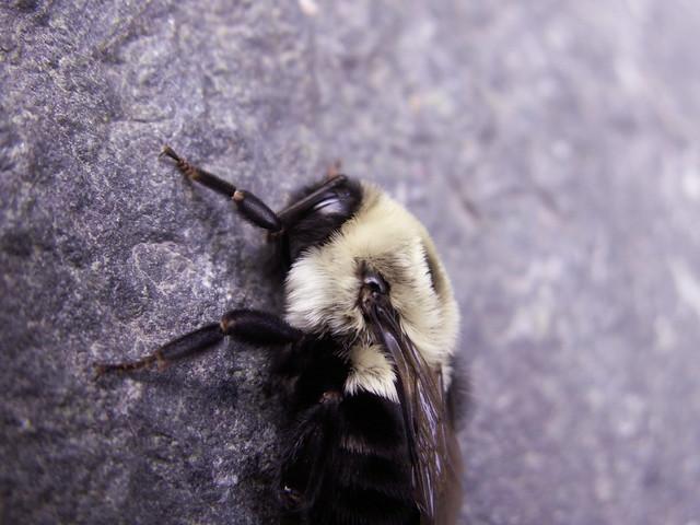 sleepy bee two