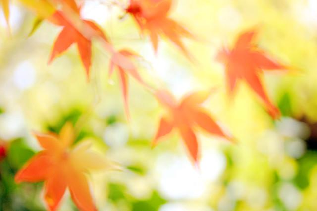 Autumn leaves ~夢~