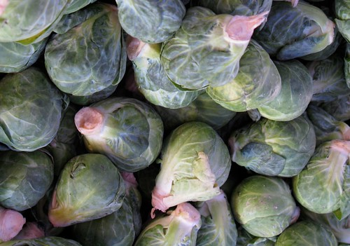 Brussels Sprouts | by dogolaca
