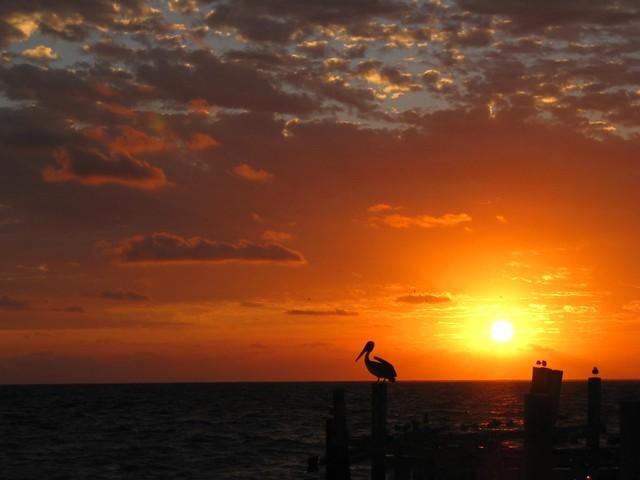 Good Morning Mr. Pelican!
