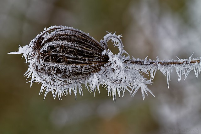 Frost spell - Sort de givre