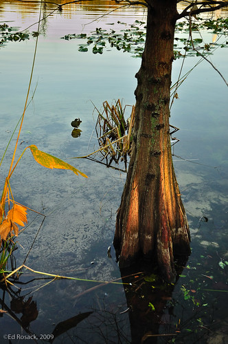 Lake Lily Park tree and bird at dawn | by Ed Rosack