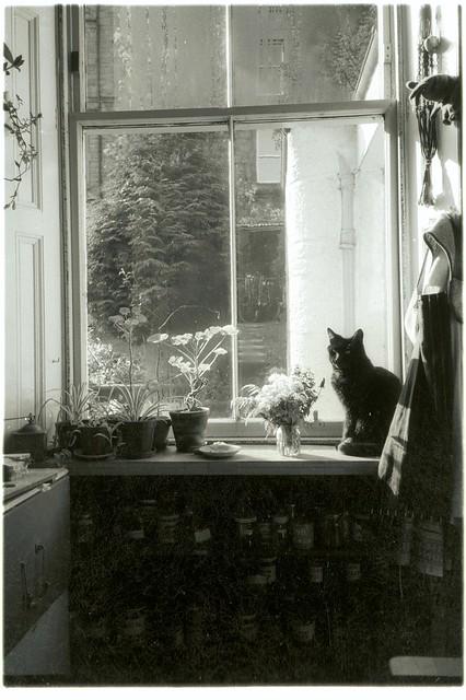Leg the big black cat in the Kitchen window, Ploughshare