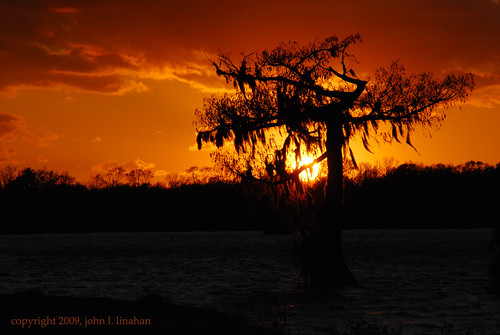 sunset orange cloud black tree landscape nikon louisiana gray scenic christmaseve 2009 d60 lakemartin breauxbridge silhoustte 0937 cmwdorange nikonflickraward cypressislandpreserve