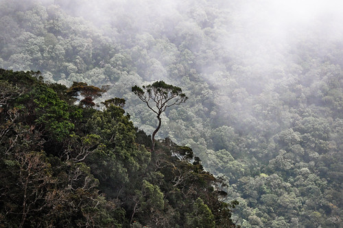 srilanka pattipola bandarewela horton plains national park nature mountain metres contrast height cloud clouds fog bush tree trees green scenery landscape naturepf