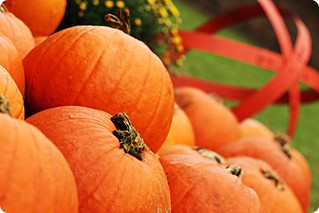 When black cats prowl and pumpkins gleam, May luck be yours on Halloween. | by ॐ dragonflyriri ॐ (Limited Flickr Time)