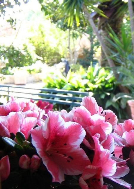 fiorire d'inverno - photo #21