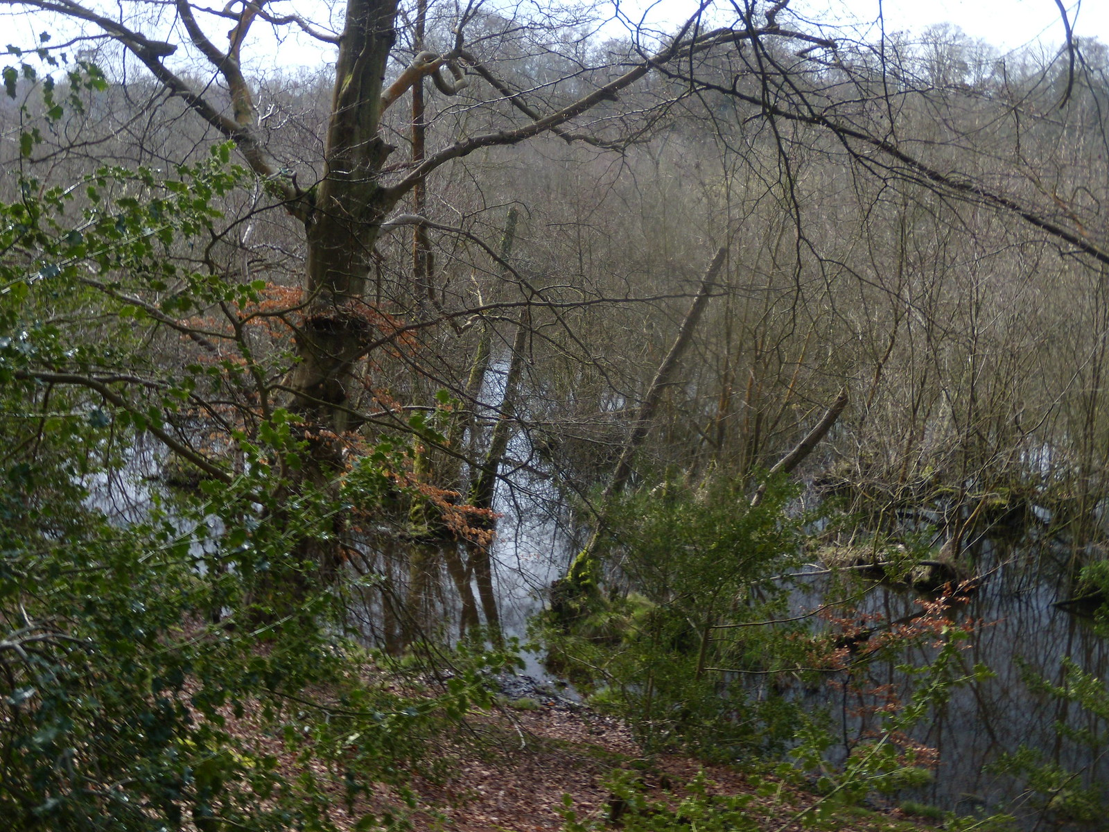 "Alder carr The ""Surrey Everglades"". Farnham Circular"