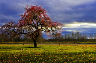 Apple tree | by Billy Wilson Photography