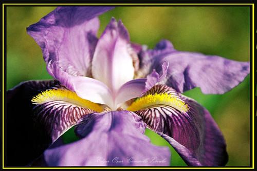 Macro violeta