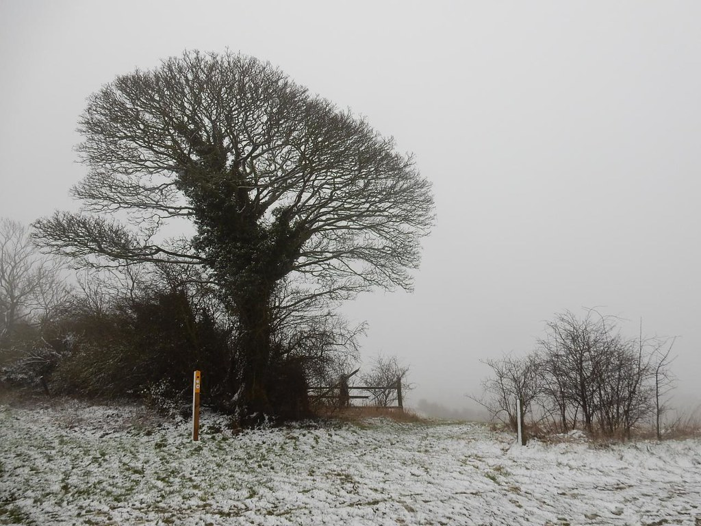 Tree with a would-be view Behind is all fog. Harlington Circular