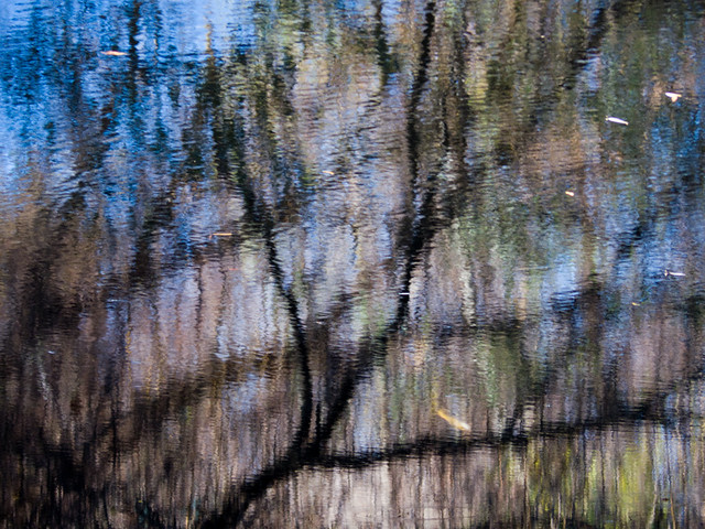 Tree, pond