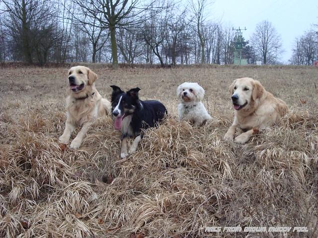 2009_03_05 - Ares, Chimney, Monty