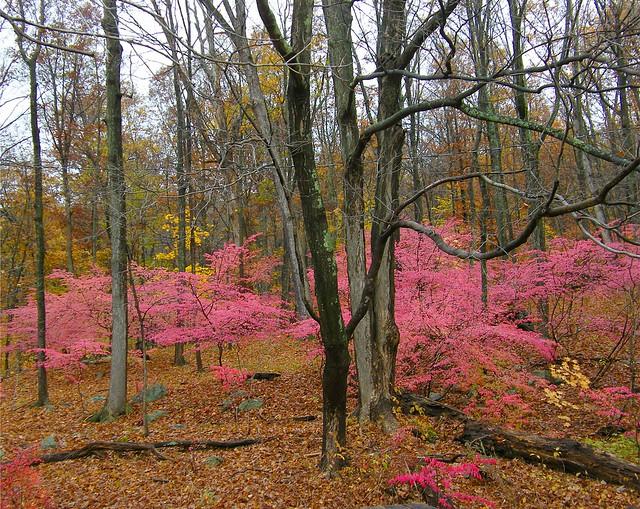 Rainy Pink Autumn