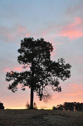 morning pink sky tree sunrise dawn am sooc topoftheday dsc5729