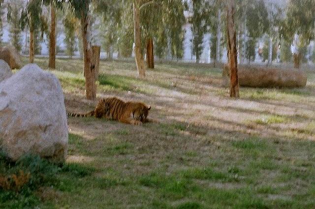 İZMİR Wildlife Park 14