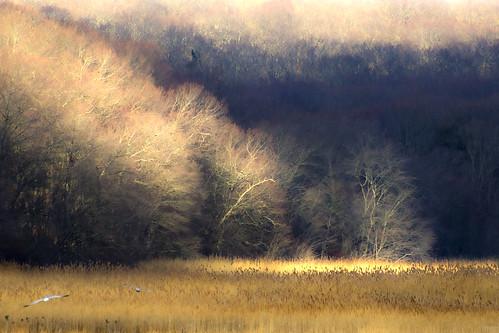 trees winter sun birds landscape connecticut newengland ct marsh rockyneck eastlyme flickraward giantonio kgiantonio kengiantonio planttreesorflowersanywhere