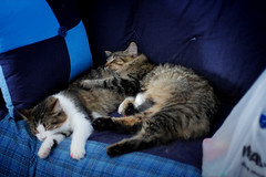 12/29/07 Biscuit and Muffin | by angelle321