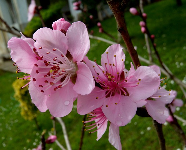 Ya es Primavera!!!