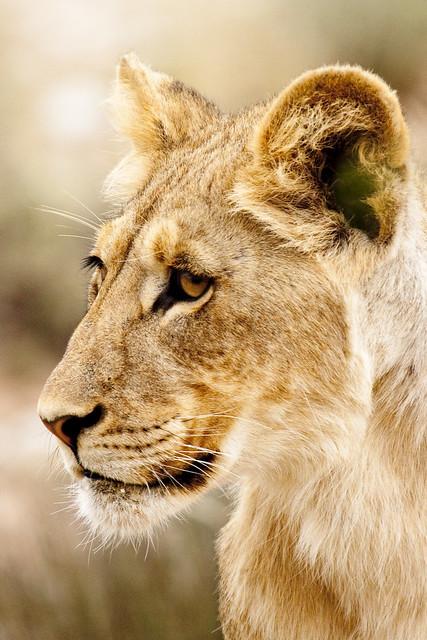 Kalahari Portrait