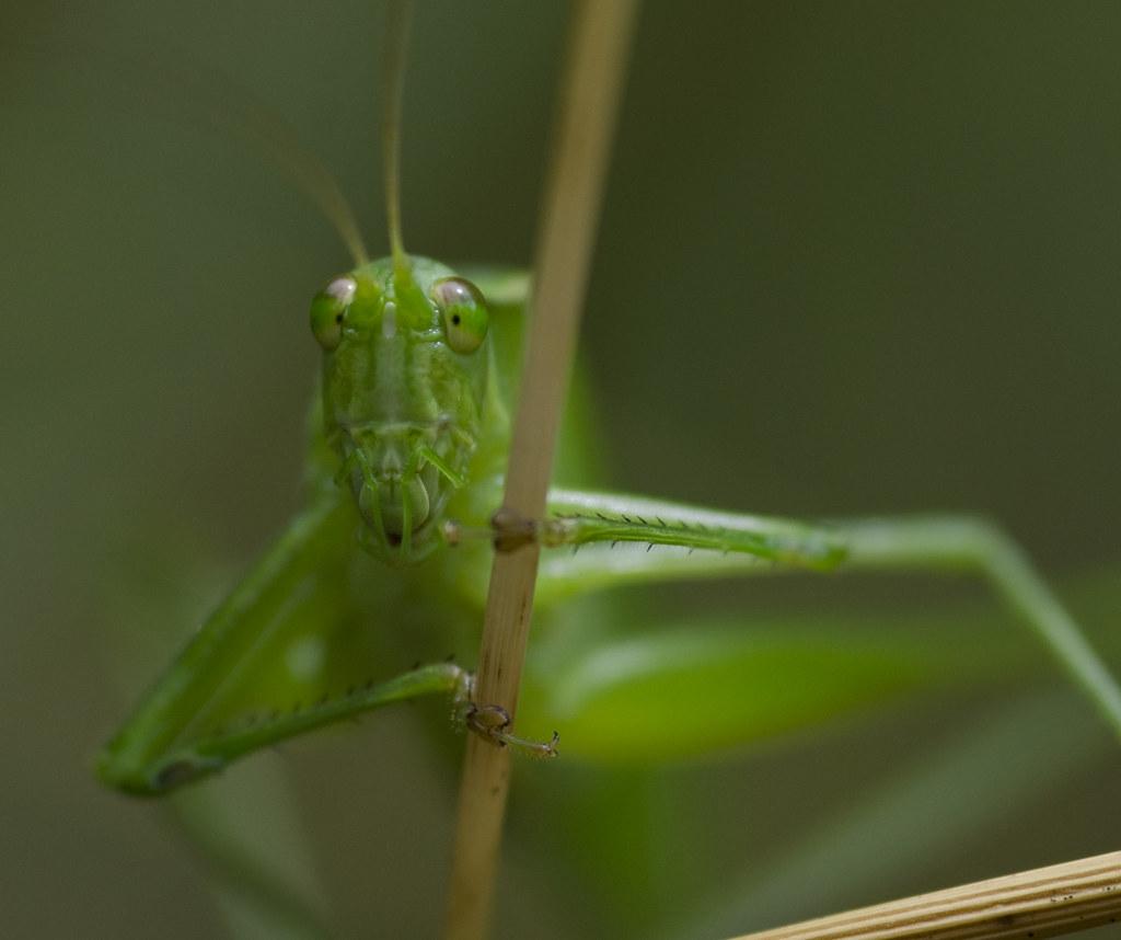 She's got katydid eyes.