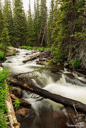 park trees wild summer portrait mountain mountains green nature water beautiful beauty creek forest river landscape rockies outdoors waterfall colorado stream natural outdoor scenic rocky scene falls flowing wilderness cascade pinetrees rooseveltnationalforest bouldercounty jamesboinsogna