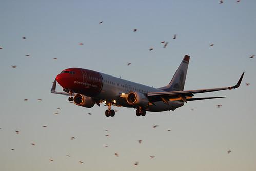 LN-NGL , 2013 Boeing 737-8JP/W C/N 39023 | by Krister Karlsmoen