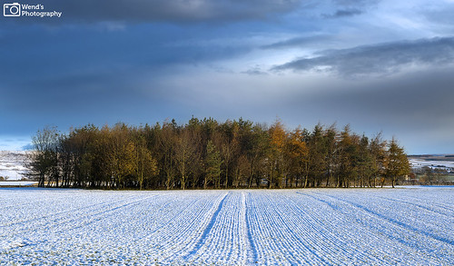 autumn atmosphere autumnal britain copse clouds dales england landscape northyorkshire national park photography rural countryside scenery trees uk wensleydale winter snowscape snow