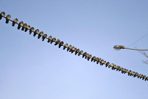 Pigeons in a Row | by Andrey Belenko