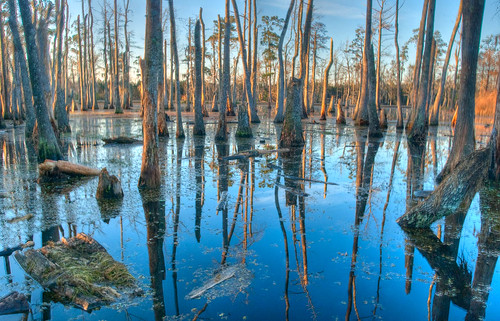 bayou swamp samhoustonjonesstatepark