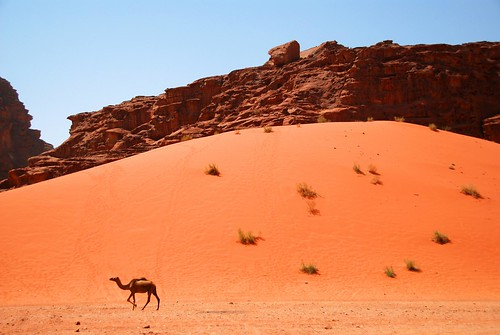 a lone ranger, wadi rum | by hopemeng