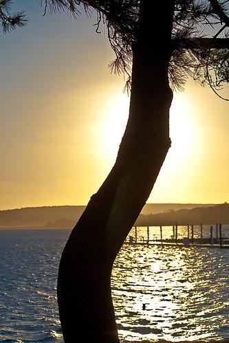 tree sunrise massachusetts plymouth