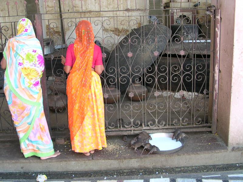 Karni Mata Temple (Bikaner)