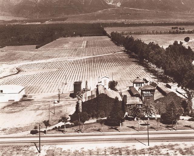Virginia Dare Winery, Cucamonga, California 1910