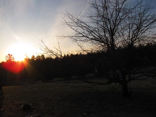 tree silhouette sunrise maine kristen cates standish